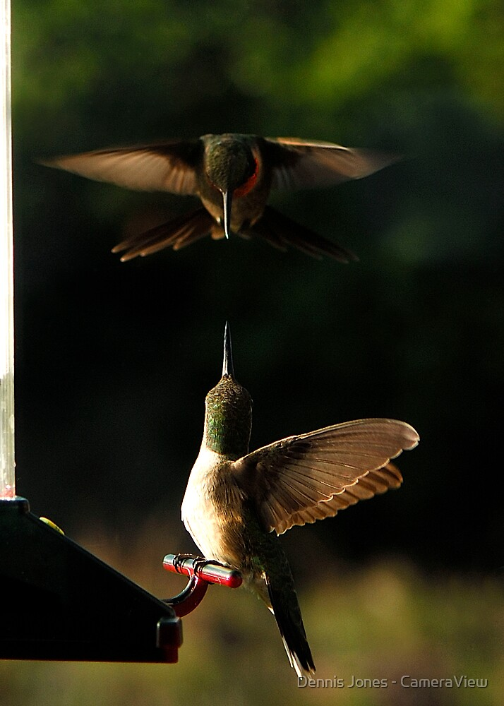 Hummer Aerials by Dennis Jones - CameraView