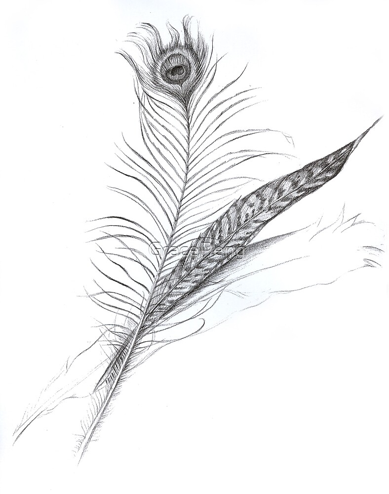 Feather by GracePeng
