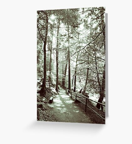 In the forest Greeting Card