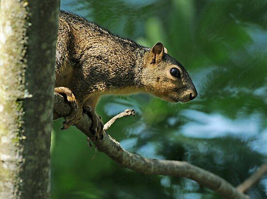 Can't fool a squirrel . . . by Bonnie T.  Barry