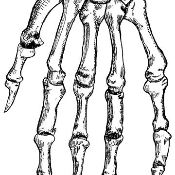 Skeletal Hand by TheArtisticDude