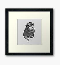 Sweet Black Pug Framed Print