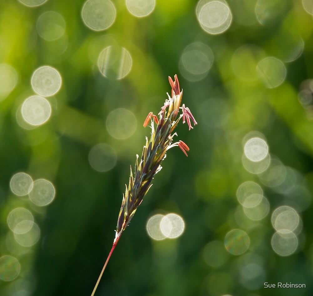 Grass Seedhead by Sue Robinson