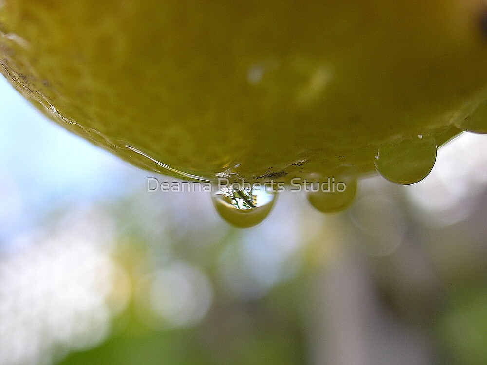 Lemon Drops by Deanna Roberts Think in Pictures