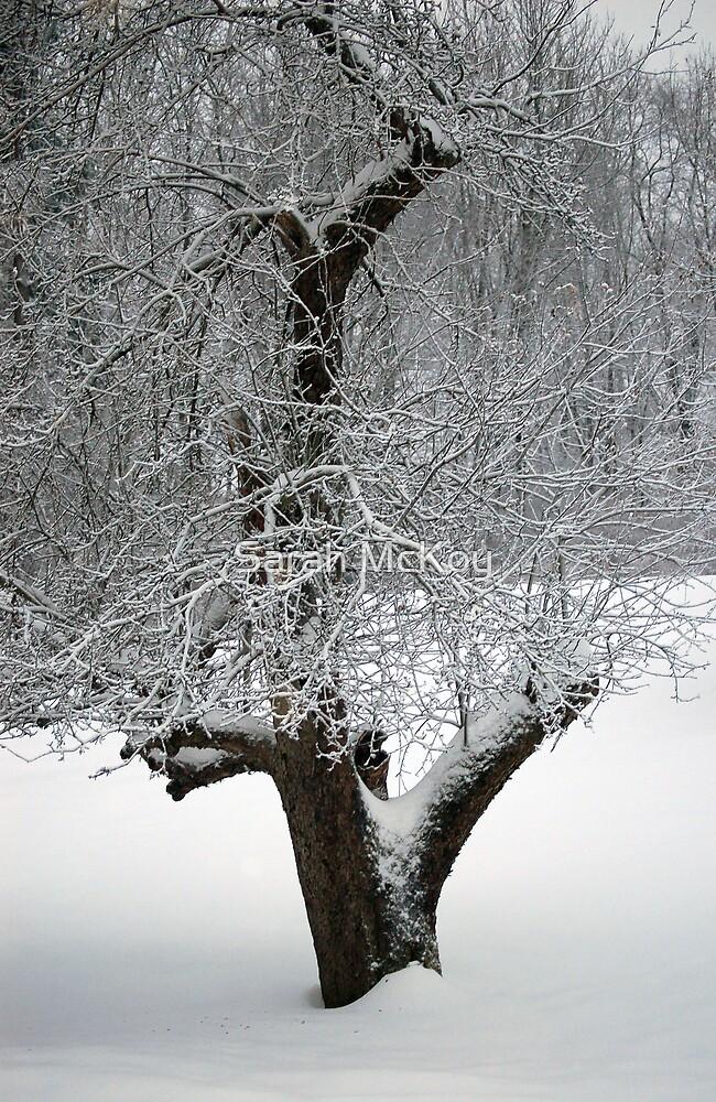 Winter Apple by Sarah McKoy