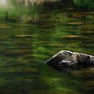 Daintree National Park.....Mossman Gorge by Imi Koetz