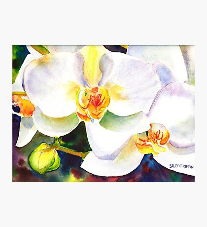 Orchids   Photographic Print