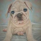 Pudgy Puppy by Pam Humbargar