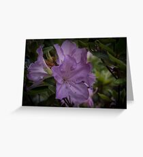 Pale purple blue Azalea flower Leith Park Victoria 20170515 0525  Greeting Card