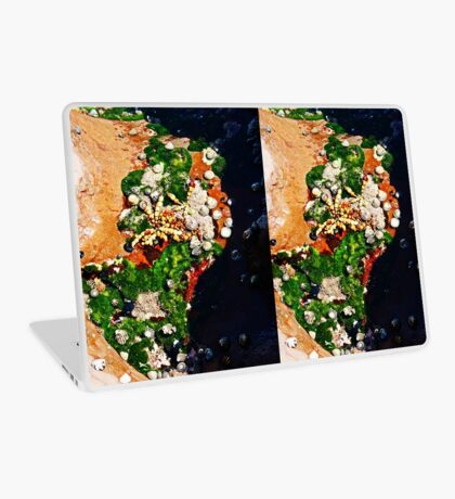 Muscheln und Moos Laptop Folie
