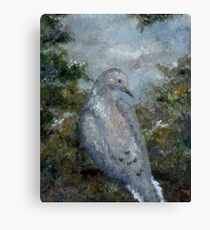 Mourning Dove Impression Canvas Print
