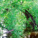 Fallen Willow Tree by Shulie1