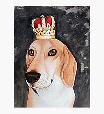 Regal Beagle Photographic Print