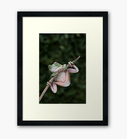 Green Tree Frog Framed Print