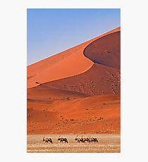 Life in the desert Photographic Print