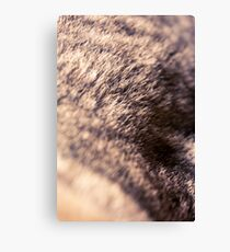 Fur... Canvas Print