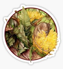 Honey Possum in Dryandra Sticker