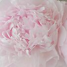 Delicate Pink Peony Flowers by Sandra Foster