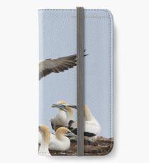Australasian Gannets - Portland VIC 60x35cm (3940) iPhone Wallet