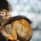 Monkey by Bente Agerup