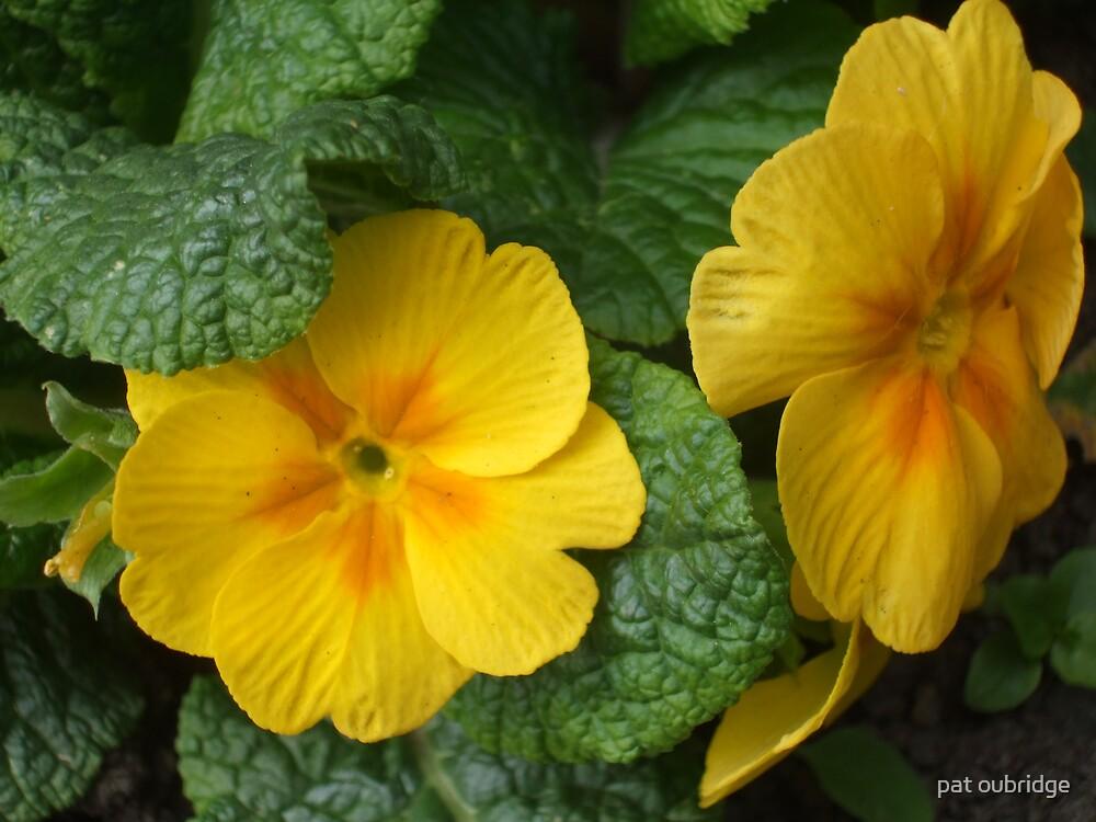 Yellow Beauty by pat oubridge