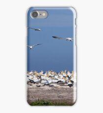 Australasian Gannets - Portland VIC (4055) iPhone Case/Skin