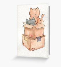 Kitties in a Box Greeting Card