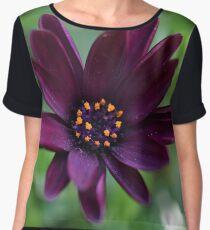 Purple Osteospermum Flower  Women's Chiffon Top