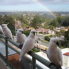 Cockatoos and Rainbow by scholara