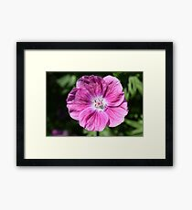 Pink summer flower blossom (Macro Close-Up) Framed Print