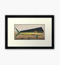 Mahi-Mahi Fish artwork Framed Print