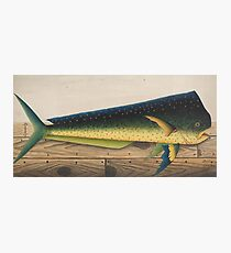 Mahi-Mahi Fish artwork Photographic Print