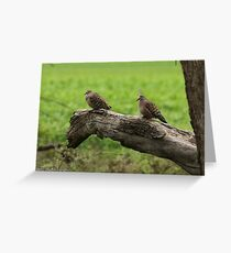 Common Bronzewings - Little Desert NP VIC (559) Greeting Card