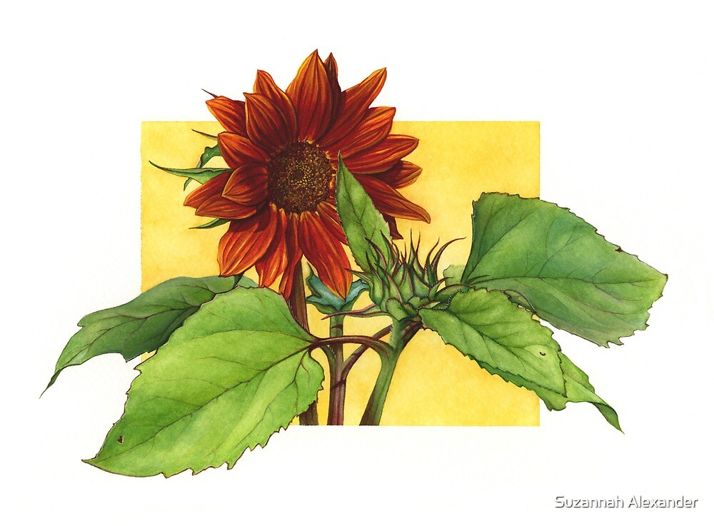 Sunflower in Red by Suzannah Alexander
