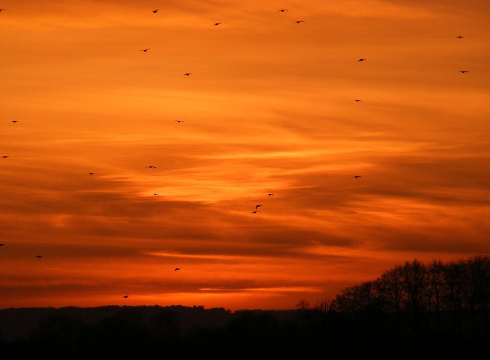 sunset flight by mitchphoto
