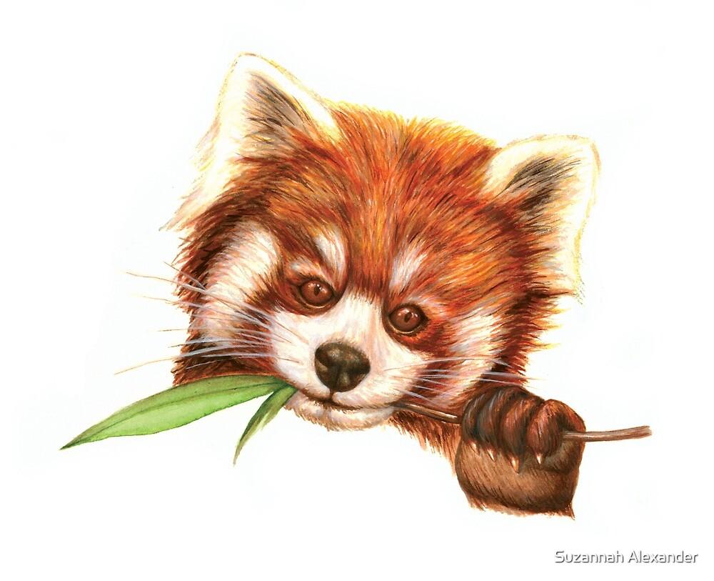 Red Panda by Suzannah Alexander