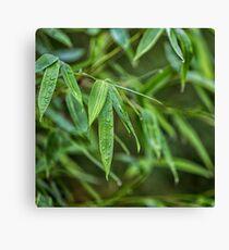 Fresh Green Zen Bamboo Leaf Canvas Print