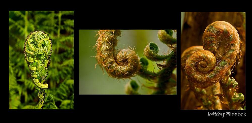 Growth of a Fern by Jeffrey  Sinnock