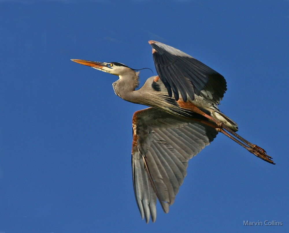 Heron III by Marvin Collins