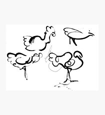 brush drawings of chickens   Photographic Print
