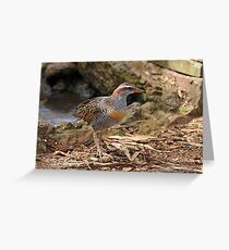 Buff-banded Rail - Lara VIC (962) Greeting Card