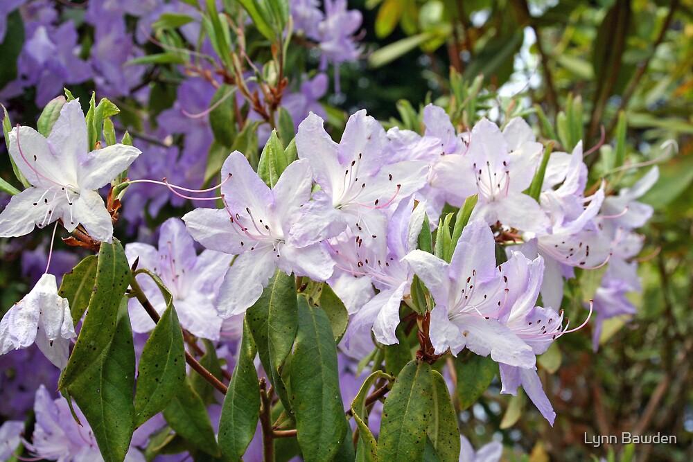 """""""Flowering Beauties"""" by Lynn Bawden"""