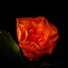 Flowers Are Born At Night by Michael Reimann