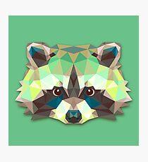 Raccoon Animals Gift Photographic Print