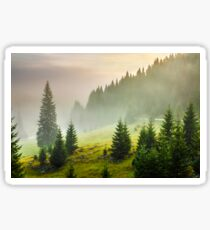 fir trees on meadow between hillsides in fog before sunrise Sticker
