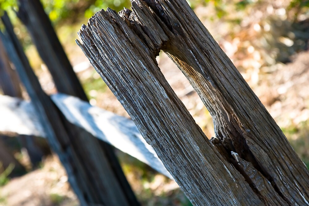 Old fence by Michael Findlay