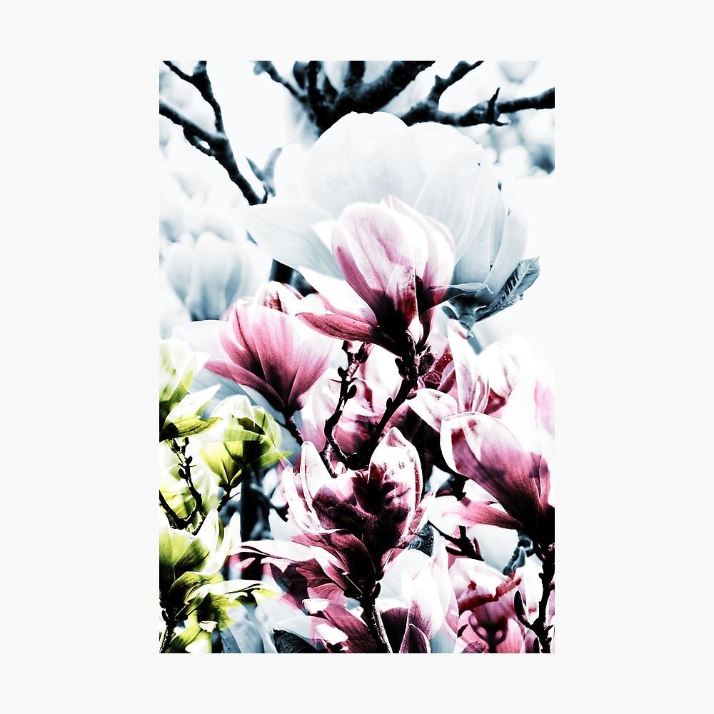 Magnolia 01 Fotodruck