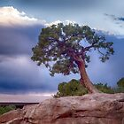 Tree on the Edge - Canyonlands National Park - Utah by Kathy Weaver