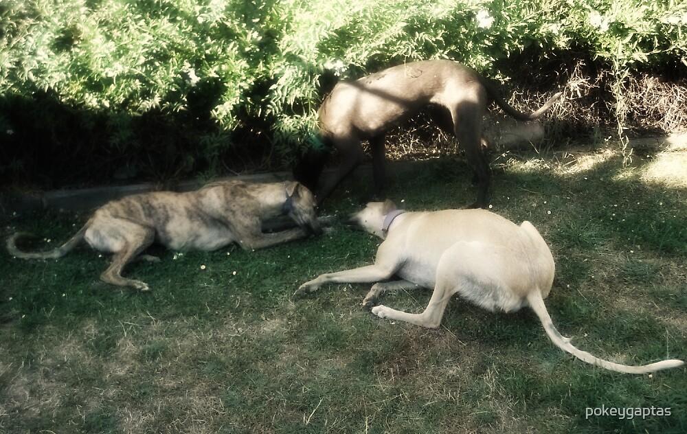 Hounds in the Garden by pokeygaptas