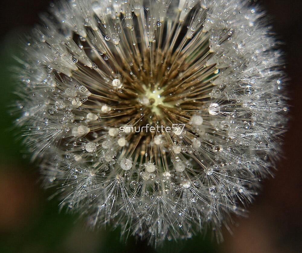 dewdrops by smurfette57